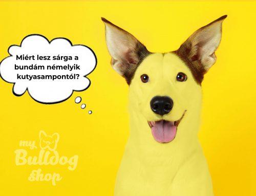 Miért lesz sárga a kutya bundája némelyik kutyasampontól?