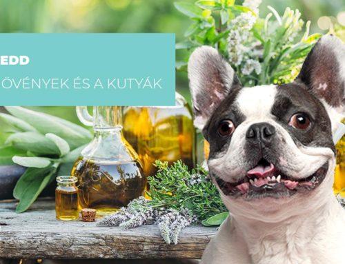 Mi a lényege a gyógynövényeknek és miért adjuk a kutyánknak?
